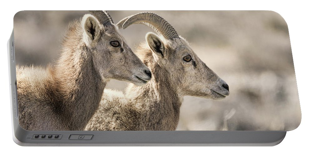 Desert Bighorn Sheep Portable Battery Charger featuring the photograph Lost In Meditation by Dennis Bolton