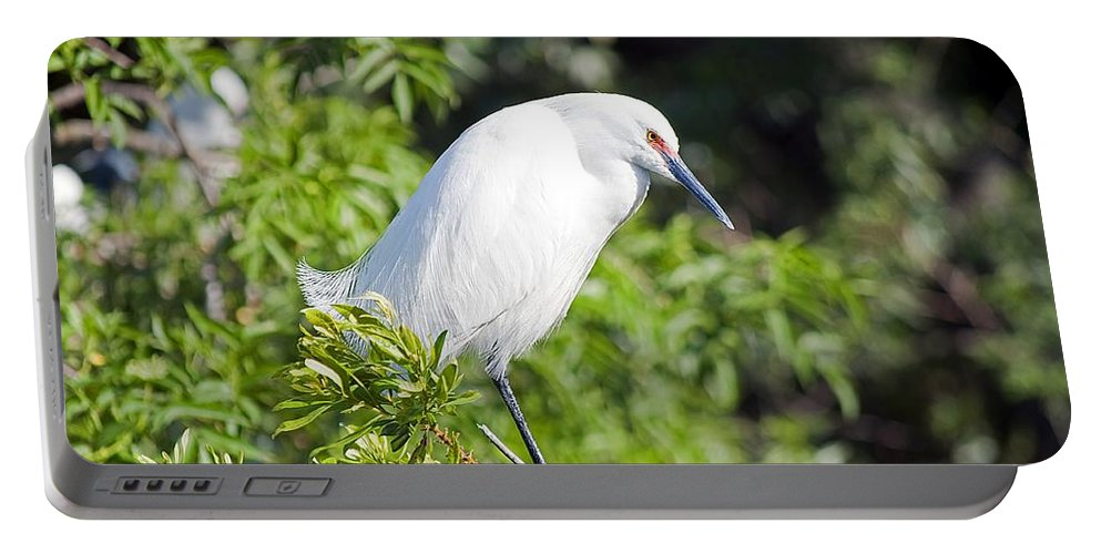 Egret Portable Battery Charger featuring the photograph Lost In Thought by Kenneth Albin