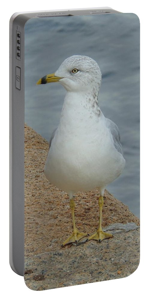 Seagull Portable Battery Charger featuring the photograph Lost Seagull by Susy Wilkinson