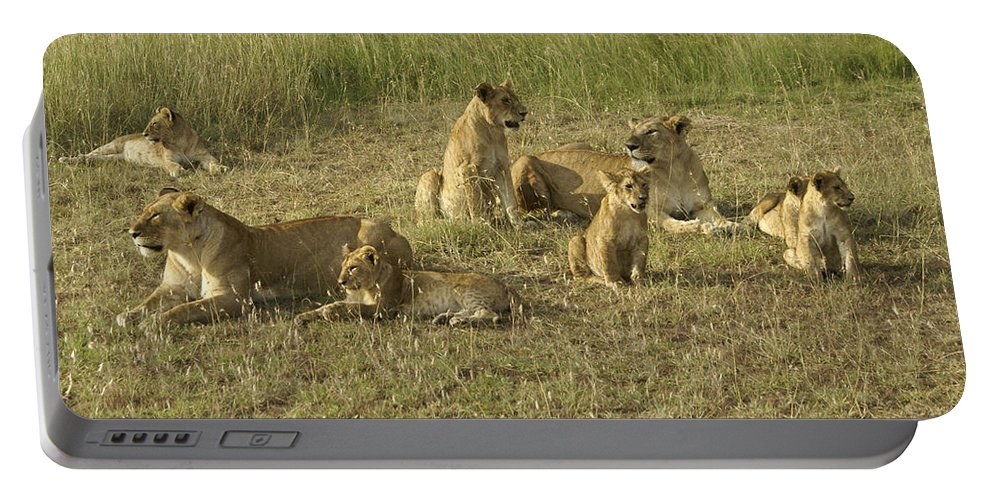 Africa Portable Battery Charger featuring the photograph Lotsa Lions by Michele Burgess