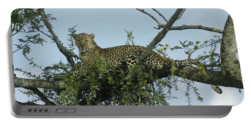 Africa Portable Battery Charger featuring the photograph Lounging Leopard by Michele Burgess