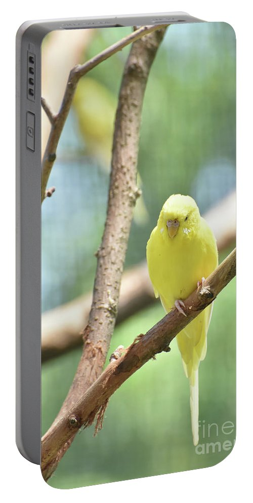 Budgie Portable Battery Charger featuring the photograph Lovable Little Budgie Parakeet Living In Nature by DejaVu Designs