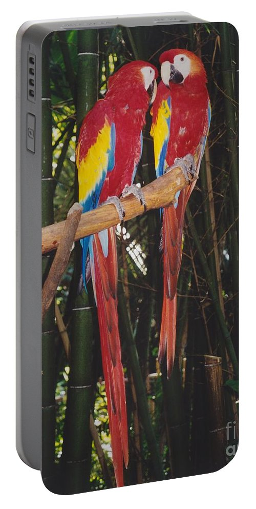 Birds Portable Battery Charger featuring the photograph Love Birds by Michelle Powell