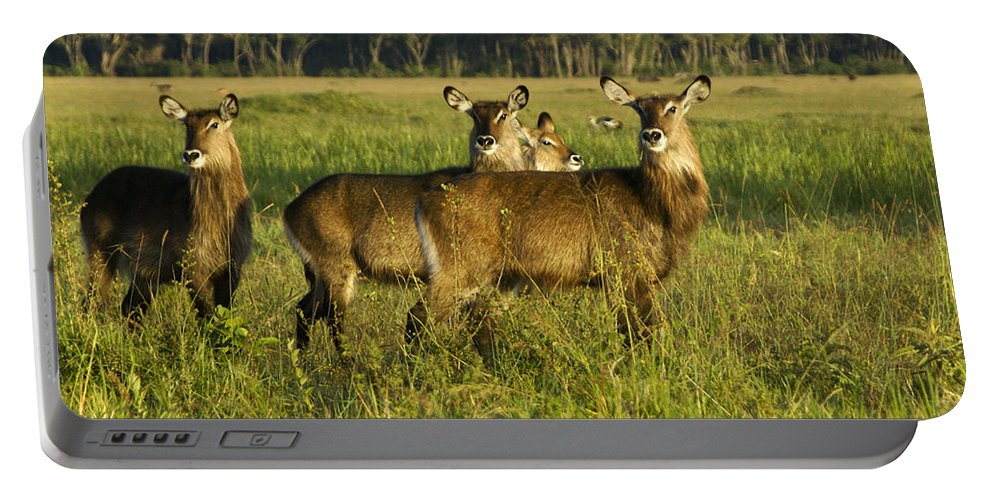 Africa Portable Battery Charger featuring the photograph Lovely Ladies by Michele Burgess