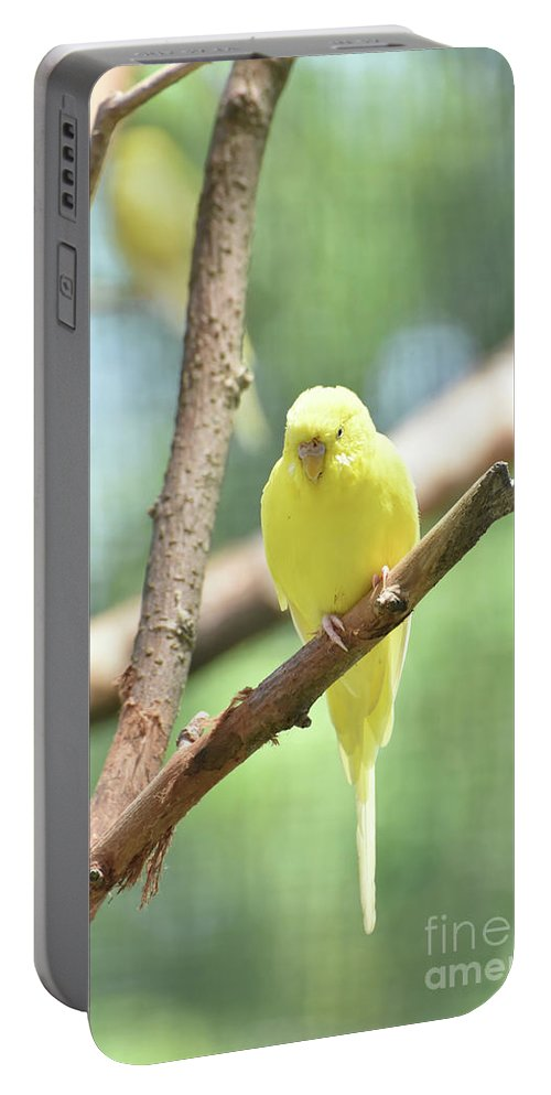 Budgie Portable Battery Charger featuring the photograph Lovely Yellow Budgie Parakeet In The Wild by DejaVu Designs