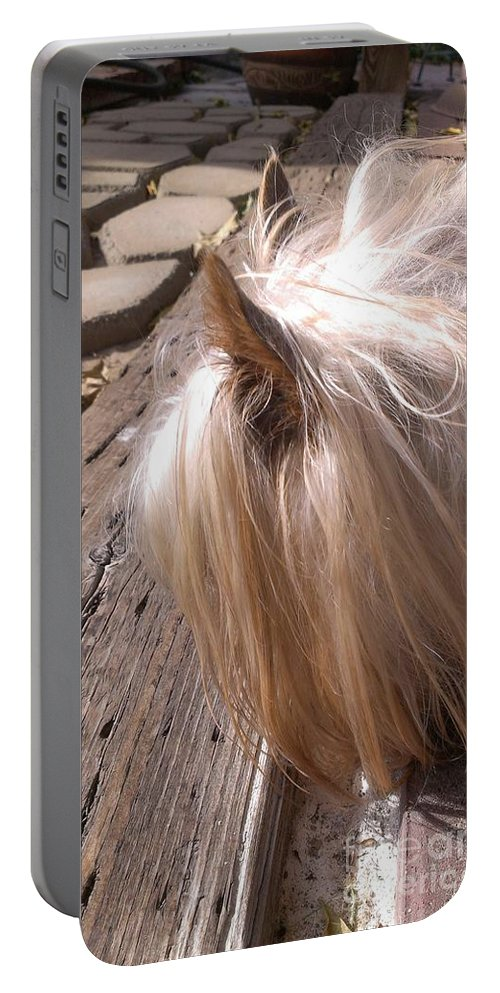Canine Portable Battery Charger featuring the photograph Lucy by LKB Art and Photography