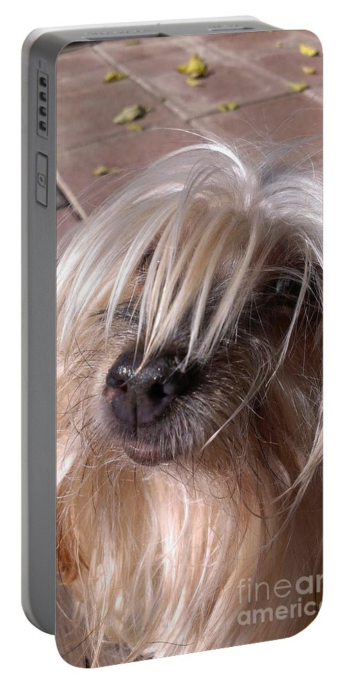 Yorkshire Terrier Portable Battery Charger featuring the photograph Lucys Smile by LKB Art and Photography