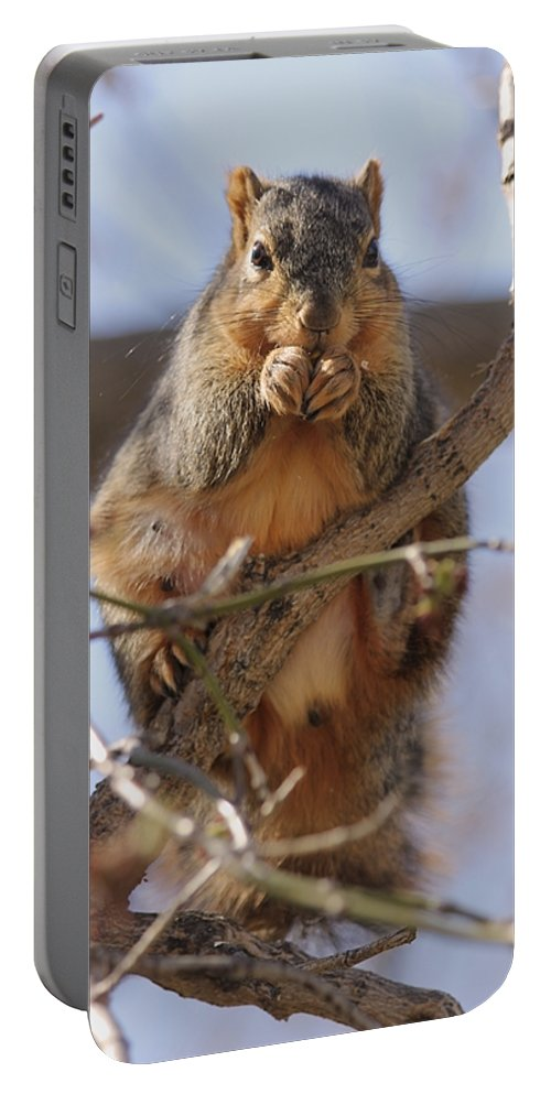 Squirrel Portable Battery Charger featuring the photograph Lunch by Lori Tordsen