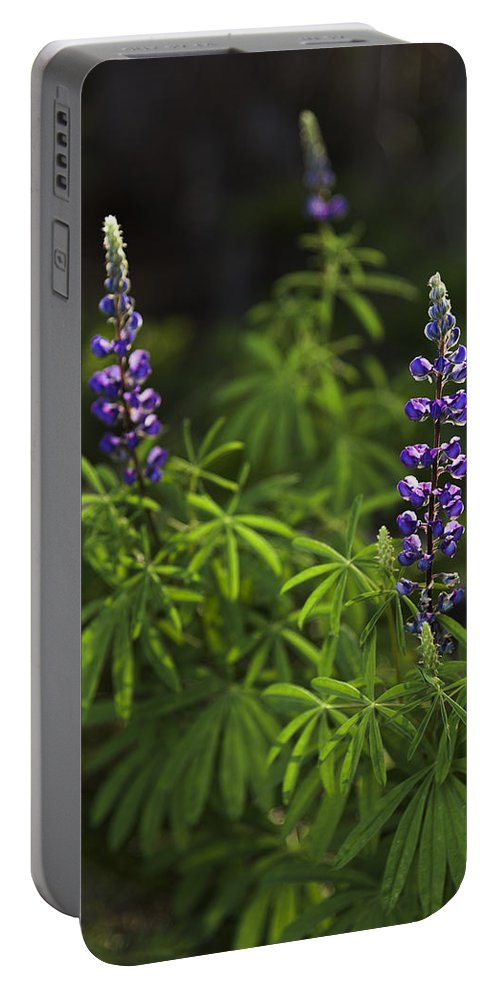 Lupine Portable Battery Charger featuring the photograph Lupine by Chad Dutson