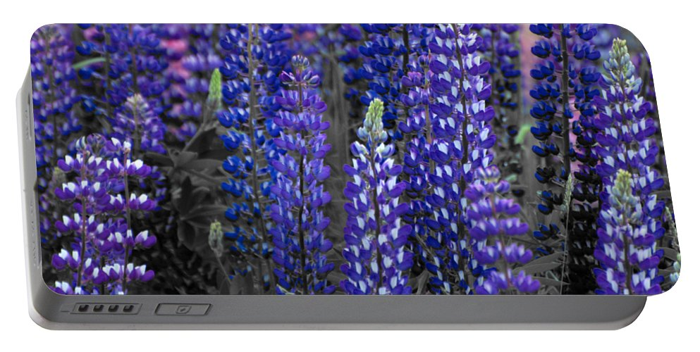 Canada Portable Battery Charger featuring the photograph Lupins 2016 34a by Rodger Wilkie