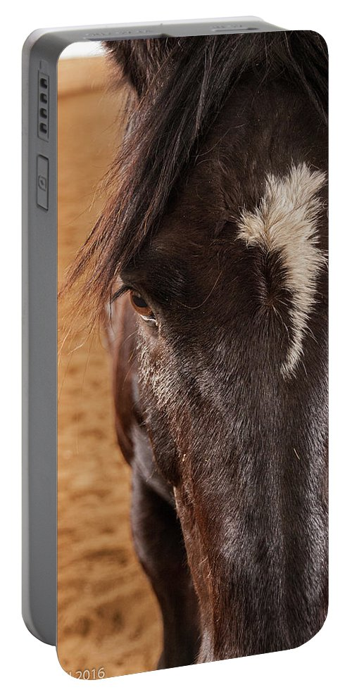 Horse Portable Battery Charger featuring the photograph Lyric by Deanna Paull