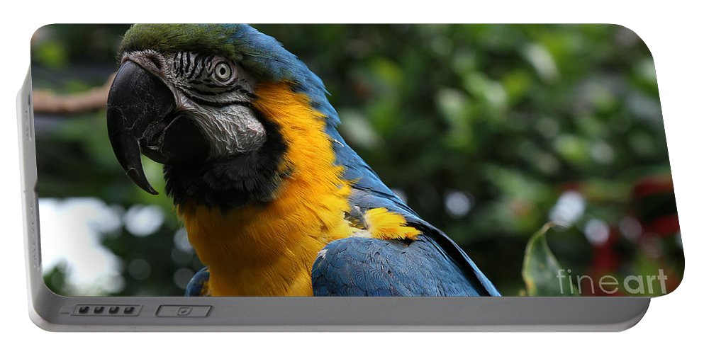 Macaw Portable Battery Charger featuring the painting Macaw by Sue Harper
