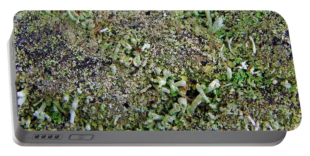 Moss Portable Battery Charger featuring the photograph Macro Forest by D Hackett