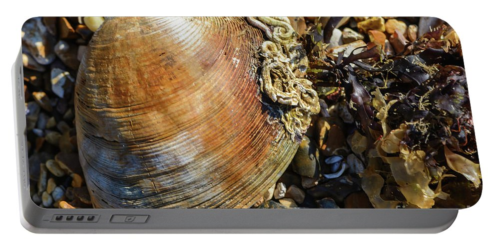 Beach Portable Battery Charger featuring the photograph Macro Shell by Paul Cummings