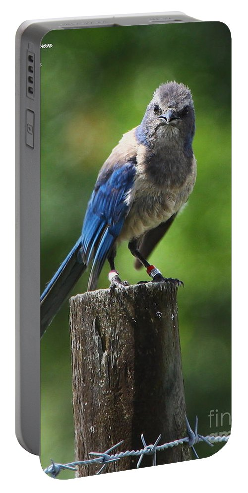 Florida Scrub Jay Portable Battery Charger featuring the photograph Mad Bird by Barbara Bowen