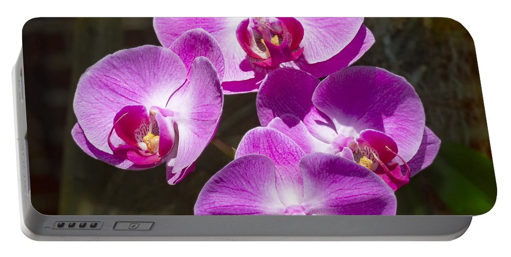Flower Portable Battery Charger featuring the photograph Magenta Orchids by Bob Slitzan