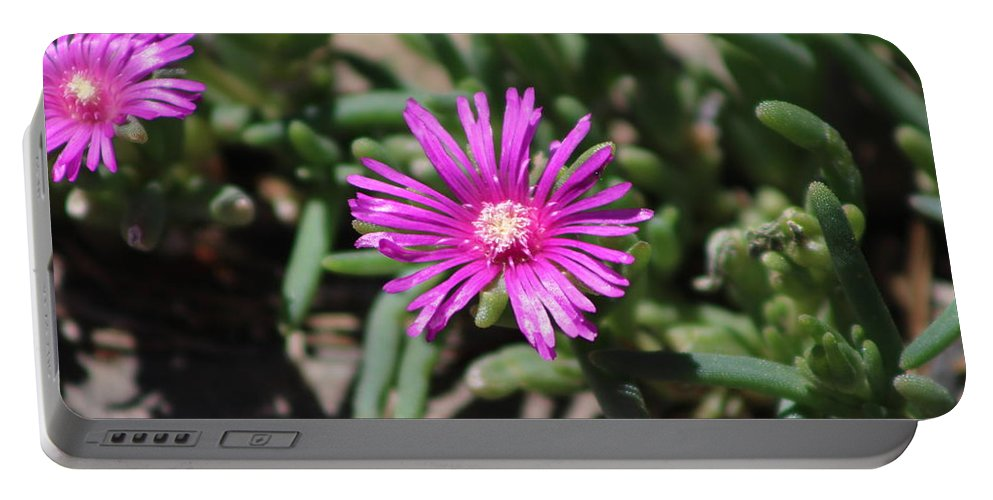 Desert Rose Portable Battery Charger featuring the photograph Magenta Purple Desert Moss Rose by Colleen Cornelius