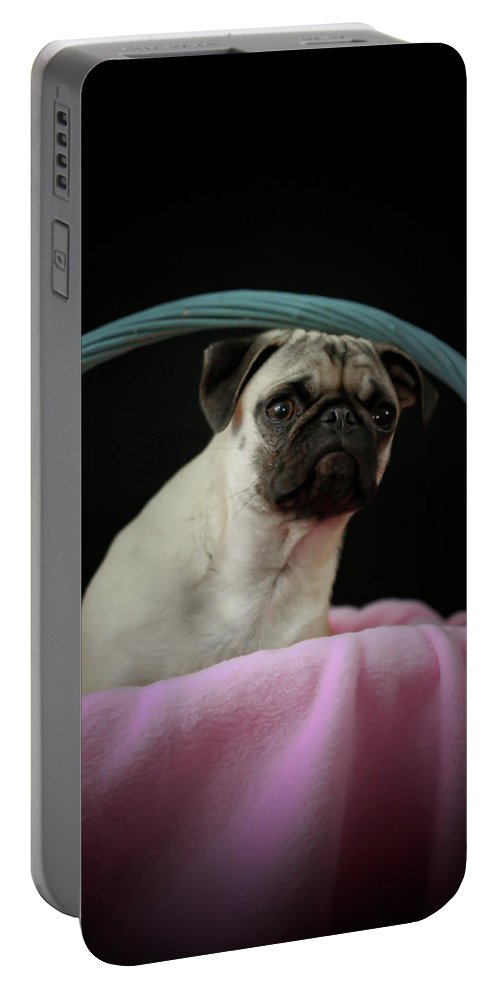 Dog Portable Battery Charger featuring the photograph Maggie In A Basket by Trish Tritz