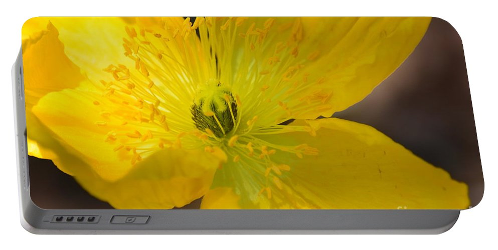 Magic Of The Golden Poppy Portable Battery Charger featuring the photograph Magic Of The Golden Poppy by Maria Urso