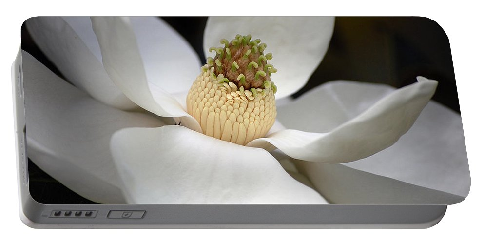 Flowers Portable Battery Charger featuring the photograph Magnolia 2 by Robert Meanor