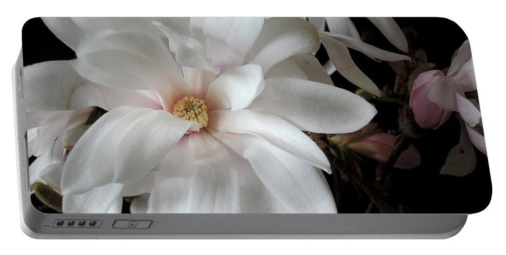 Magnolia Portable Battery Charger featuring the photograph Magnolia Flower by Guido Strambio