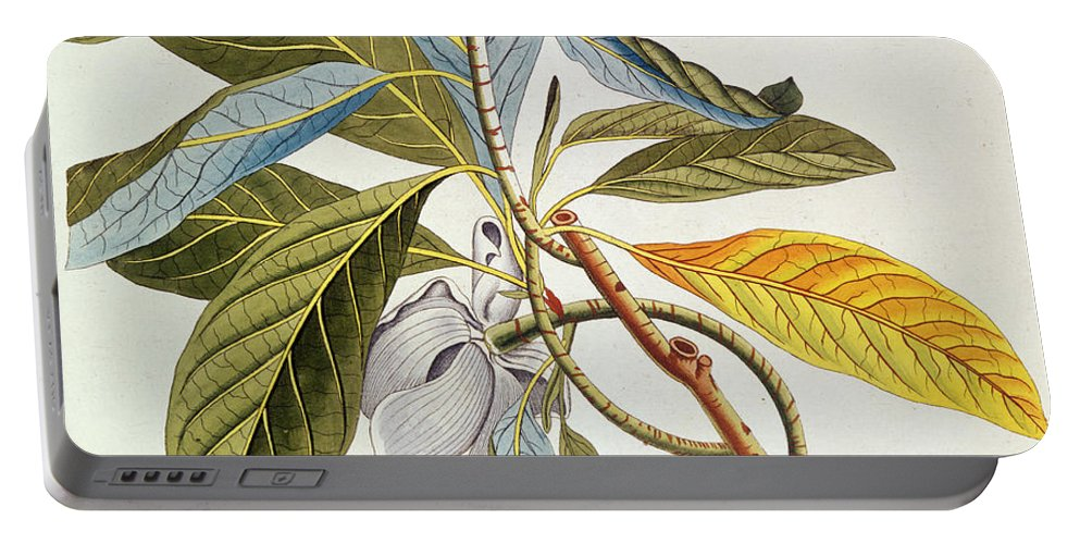 Magnolia Portable Battery Charger featuring the painting Magnolia Glauca by German School