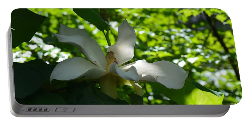 Magnolia Macrophylla Portable Battery Charger featuring the photograph Magnolia Macrophylla by Maria Urso