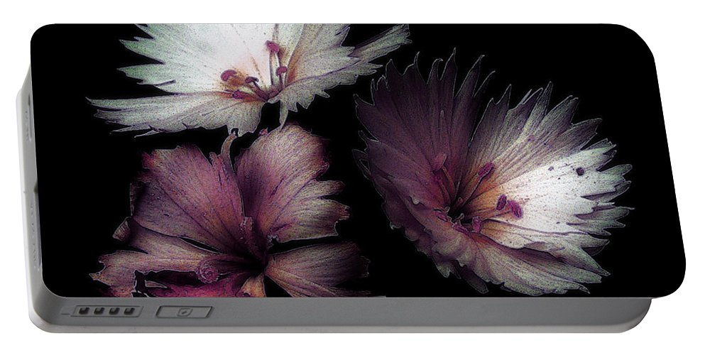 Dianthus Portable Battery Charger featuring the painting Maiden Mother Crone by RC DeWinter