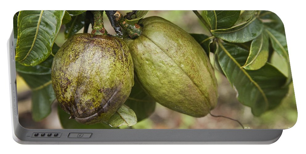Plant Portable Battery Charger featuring the photograph Malabar Chestnuts by Inga Spence