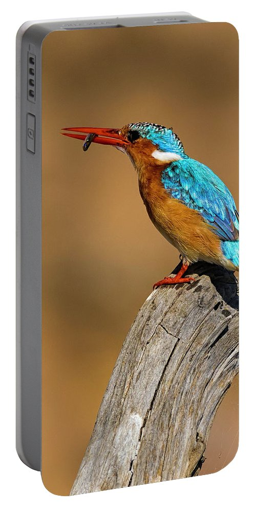 001 Avian Portable Battery Charger featuring the photograph Malachite Kingfisher by Myer Bornstein
