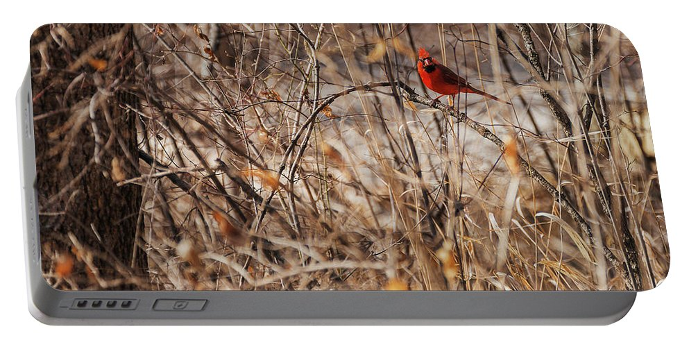 Heron Heaven Portable Battery Charger featuring the photograph Male Northern Cardinal by Edward Peterson