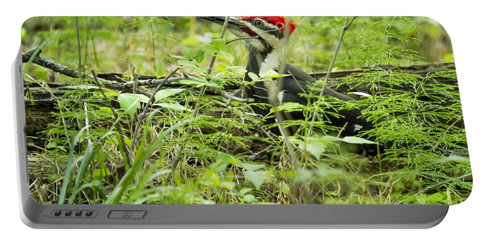 Woodpecker Portable Battery Charger featuring the photograph Male Pileated Woodpecker On The Ground No. 2 by Belinda Greb