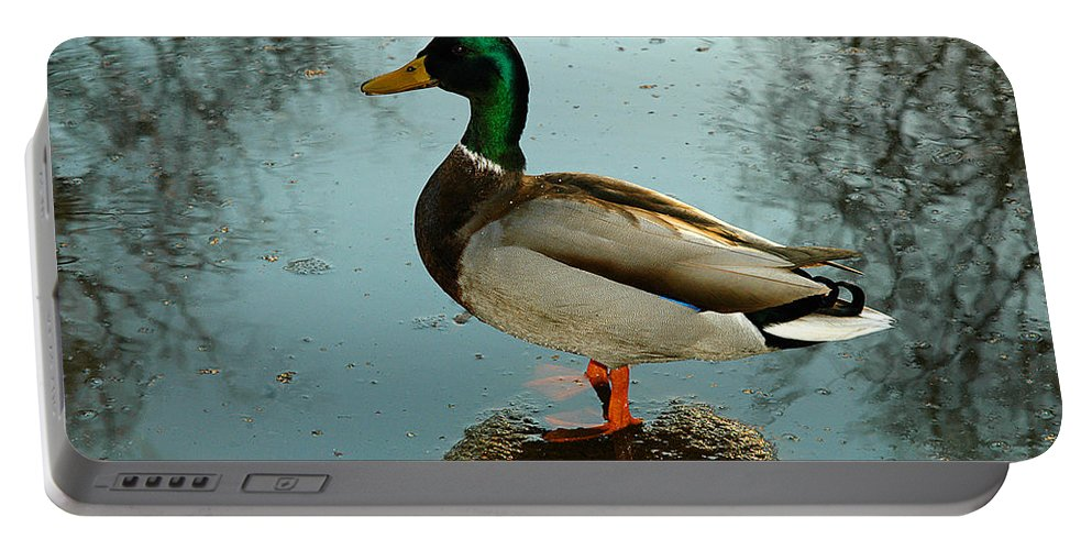 Clay Portable Battery Charger featuring the photograph Mallard by Clayton Bruster