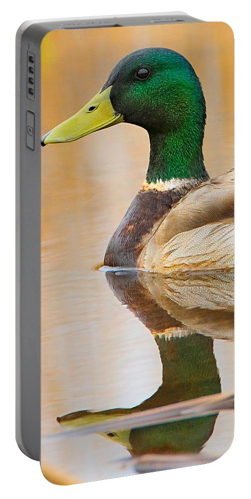 Mallard Portable Battery Charger featuring the photograph Mallard Mirror by William Jobes