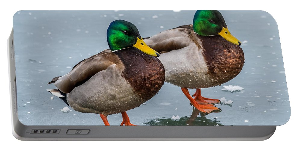 Mallard On Ice Portable Battery Charger featuring the photograph Mallards On Ice by Paul Freidlund