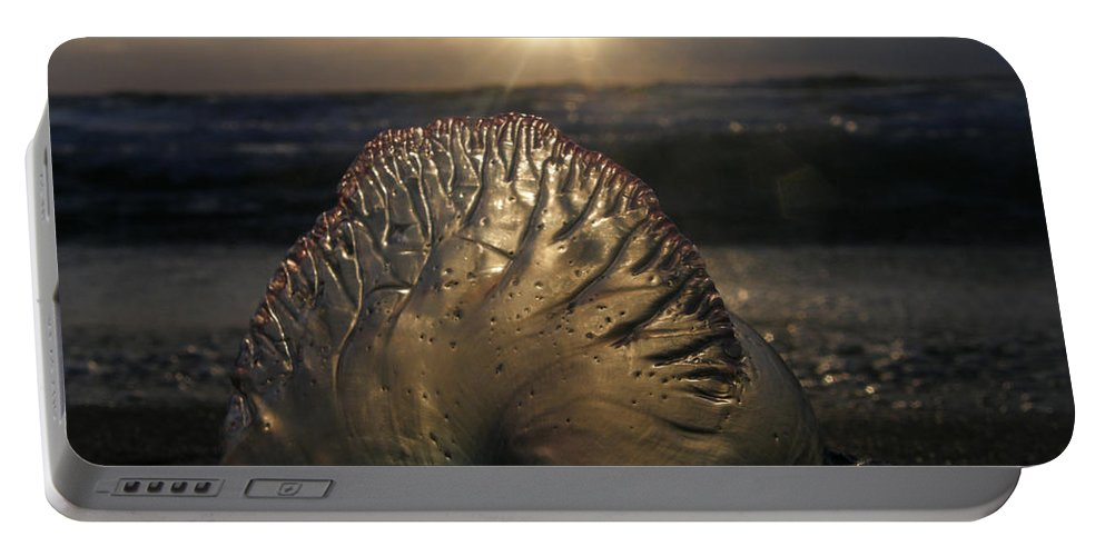 Wildlife Portable Battery Charger featuring the photograph Man-o-war Sunrise II by Kimberly Mohlenhoff