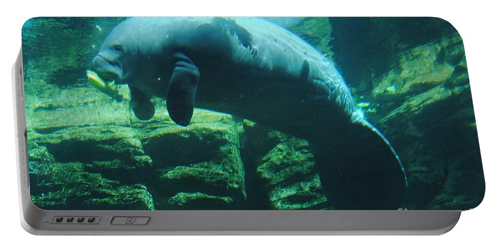 Manatee Portable Battery Charger featuring the photograph Manatee by Jost Houk