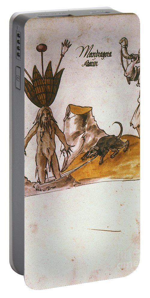 1500 Portable Battery Charger featuring the photograph Mandrake, C1500 by Granger