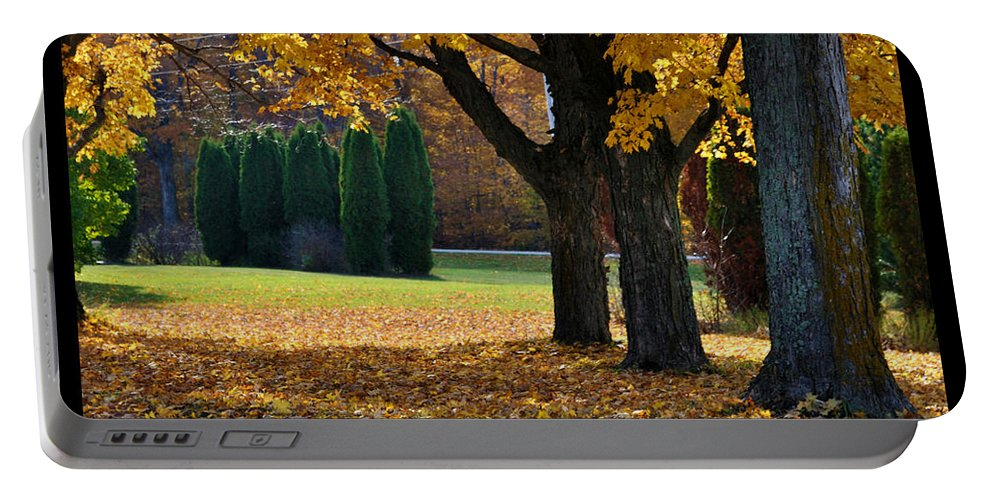 Trees Portable Battery Charger featuring the photograph Maple And Arborvitae by Tim Nyberg
