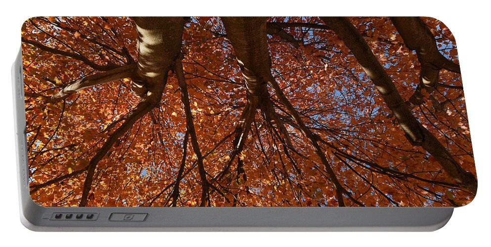 Maple Portable Battery Charger featuring the photograph Maple Dreaming by Charles Owens