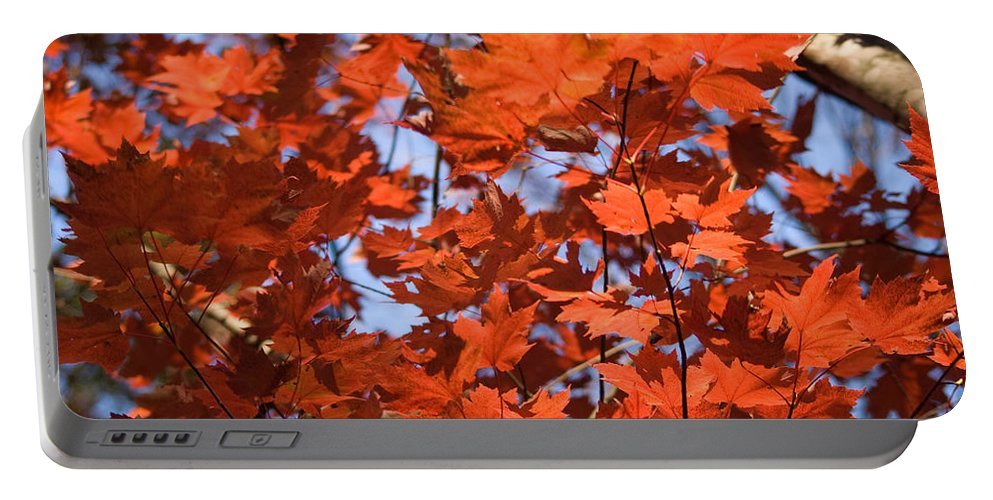 Maple Portable Battery Charger featuring the photograph Maple Leaves Aglow by Douglas Barnett