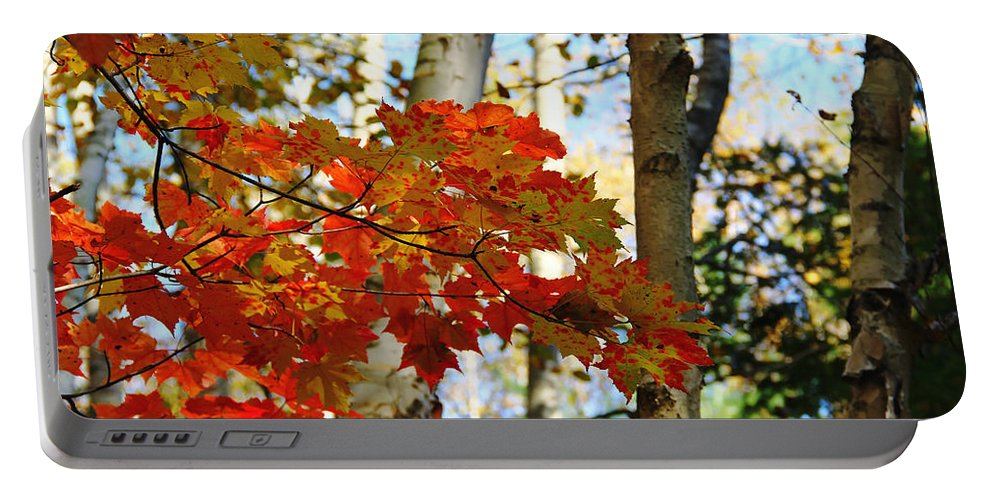 Maple Leaves And Birch Bark Portable Battery Charger featuring the photograph Maple Leaves And Birch Bark by Debbie Oppermann