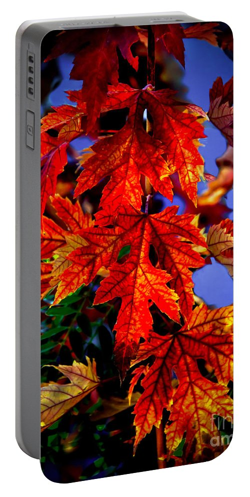 Maple Portable Battery Charger featuring the photograph Maple Leaves by Robert Bales