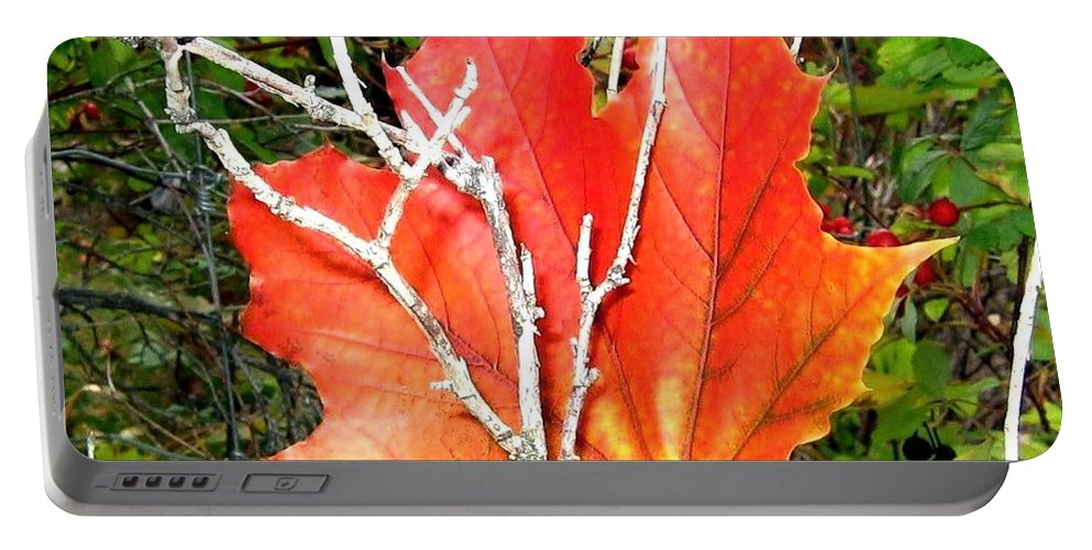 Autumn Portable Battery Charger featuring the photograph Maple Mania 6 by Will Borden