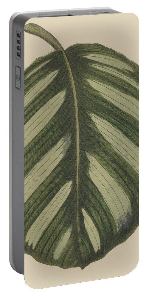 Maranta Fasciata Portable Battery Charger featuring the painting Maranta Fasciata by English School