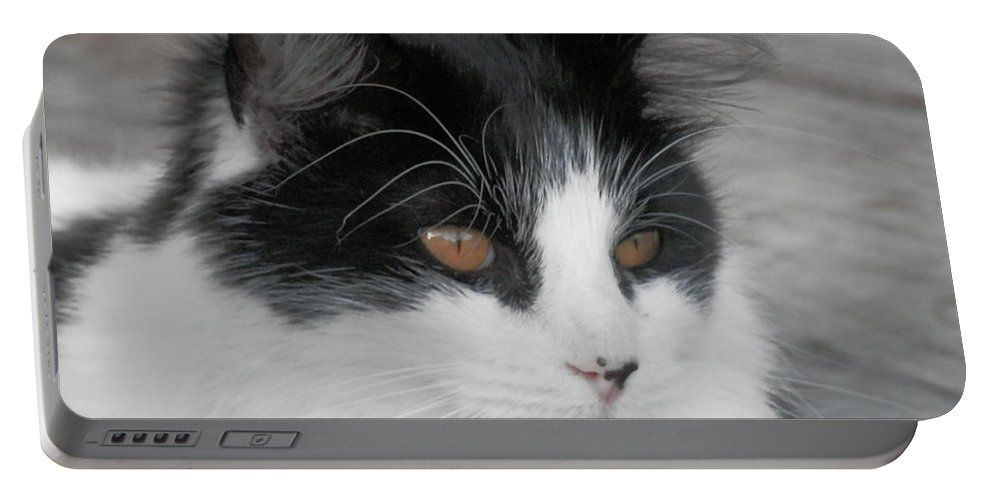 #white Portable Battery Charger featuring the photograph Marley Cat Meowning by Belinda Lee