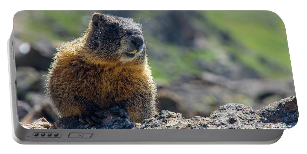 Animal Portable Battery Charger featuring the photograph Marmot On The Ridge by Rob Lantz