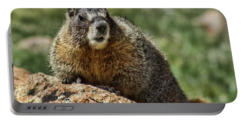 Animal Portable Battery Charger featuring the photograph Marmot by Steven Parker