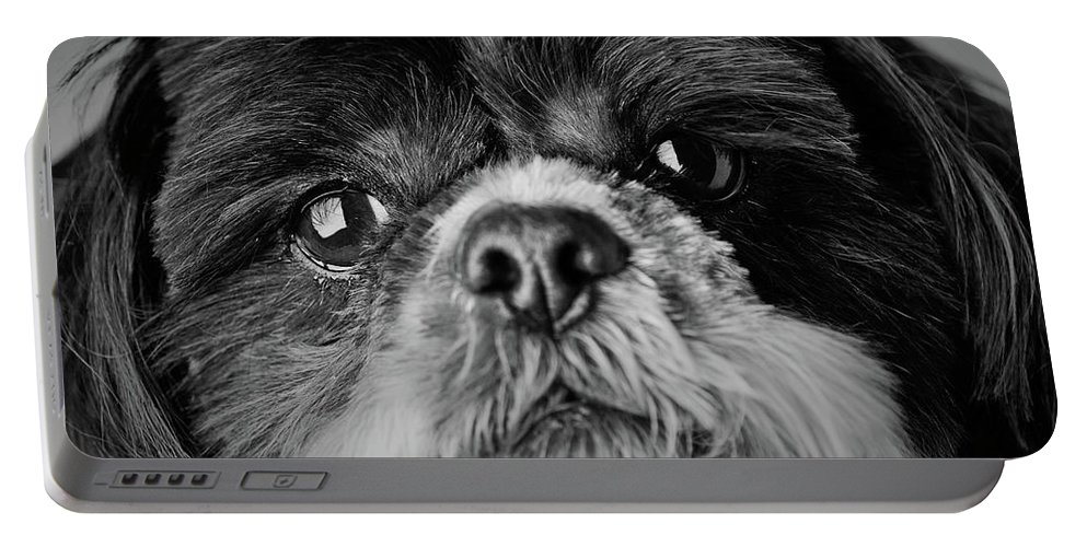 Shih Tzu Dog Portable Battery Charger featuring the photograph Max - A Shih Tzu Portrait by Onyonet Photo Studios