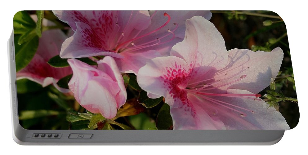 Pink Portable Battery Charger featuring the photograph Maymont Flowers by Karen Harrison